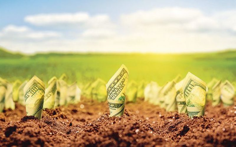 OPINIE: În campania asta toată lumea salvează agricultura. Ce rămâne după ce scuturi sloganurile și proiectele agro ale bistrițenilor