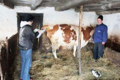 Fermele din Bistrița-Năsăud intră de astăzi în anchetă statistică. Datele sunt pentru Eurostat și se culeg între recensăminte