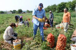 Picură din nou cu bani în conturile fermierilor bistrițeni. E vorba de sumele din ajutoarele tranzitorii