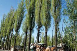 Plopii nu vor mai putea fi plantați pe orice terenuri iar suprafețelor sub 1 ha li se va putea schimba categoria doar cu aviz de la DADR