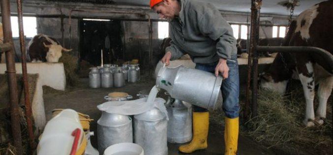 În jur de 2000 de fermieri bistrițeni ar putea fi eligibili pentru noul ajutor de urgență al UE pentru producătorii de lapte
