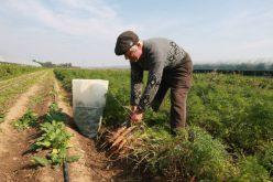 E ordin de la ministru: funcționarii Direcției Agricole scoși din birouri și puși să trimită fermierii la APIA