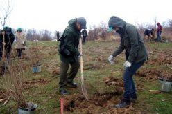 """Seduși de zecile de mii de euro de la """"prima împădurire"""" aplicanții s-au dat bătuți în fața birocrației unui program care te ține captiv 12 ani"""