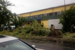 Furtuna de joi a doborât copaci pe case și pe drumuri. Județul e sub cod galben de ploi până la miezul nopții