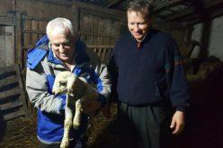 Minimisul pentru oaie a trecut de Guvern. Întrebarea e cine preia lâna