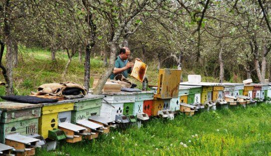 Fermele apicole fără lipici în Bistrița-Năsăud