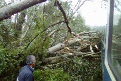 Autoritățile au aflat aseară de la ziariști că un tren de călători este blocat de copacii căzuți