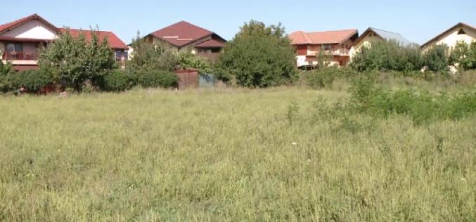 Proprietarii de terenuri care nu iau măsuri împotriva unei anumite buruiene se pot trezi și cu amenzi de 20.000 de lei. Printre inițiatorii proiectului legislativ e și un deputat bistrițean