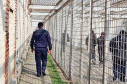 O lege semnată de 39 de parlamentari PSD riscă să golească penitenciarele. De la Bistrița ar fi eliberați mai bine de jumătate dintre deținuți