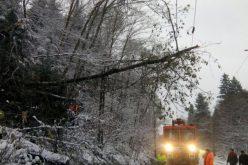 Două trenuri, dintre care unul internațional oprite din pricina unui copac căzut între Șieu și Șieuț