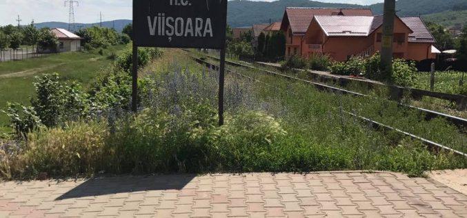 """Un an de la cumplita tragedie din Viișoara: """"Nu s-a schimbat nimic în afara de o cruce cu numele copiilor gravate"""""""