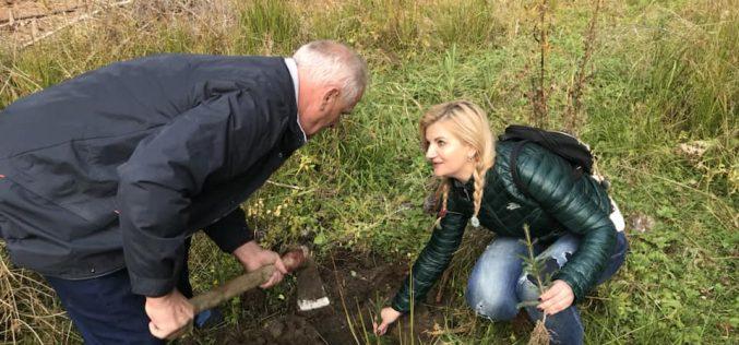 """Liberalii bistrițeni au plantat puieți la Feldru în cadrul unei campanii """"pădurea centenară"""""""